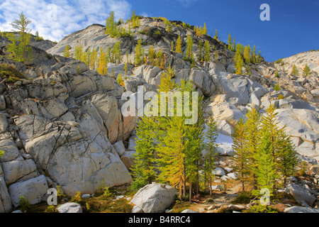 Larches at Inspiration Lake in the Enchantment Lakes area of the Alpine Lakes Wilderness, Washington - Stock Photo