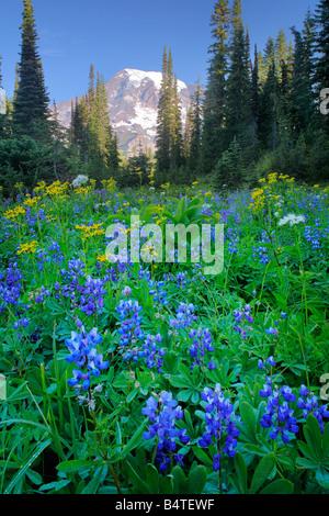 Wildflower meadow in the Tatoosh Range in Mount Rainier national park, Washington - Stock Photo