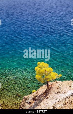 Trees growing on the Turkish Coastline - Stock Photo