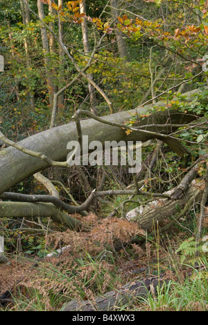 An image of a fallen tree in the middle of the Ashdown Forest surrounded by branches and autumn leaves - Stock Photo