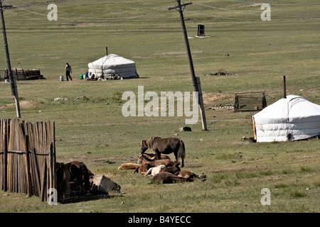 Mongolian gers (yurts), horses, and power line, Mongolia - Stock Photo