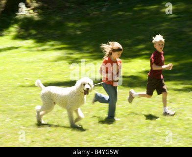 Standard poodle runs with kids - Stock Photo