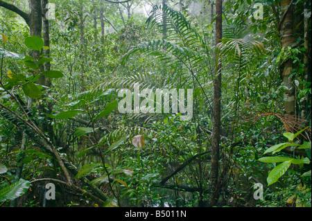 Dense rainforest in Similajau National Park nr Bintulu Sarawak Malaysia - Stock Photo
