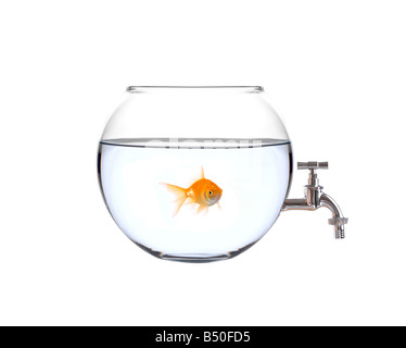 Fish in a bowl with a faucet on it - Stock Photo