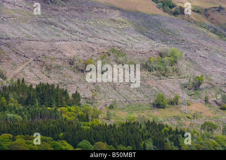 conifer plantation. and bare hillside after timber felling - Stock Photo