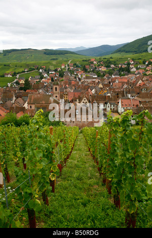 Sep 2008 View over the village of Riquewihr and vineyards in the Wine Route area Alsace France - Stock Photo