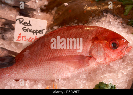Red snapper for sale at Borough Market, London - Stock Photo