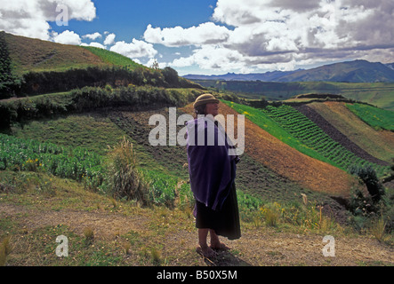 Woman agricultural fields near Zumbahua Cotopaxi Province Ecuador South America - Stock Photo