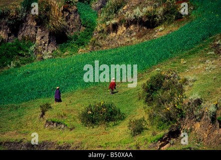 Couple agricultural fields near Zumbahua Cotopaxi Province Ecuador South America - Stock Photo