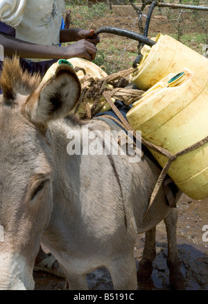 A donkey carries containers of water from a local spring to the village; just outside of Isiolo, in Kenya. - Stock Photo