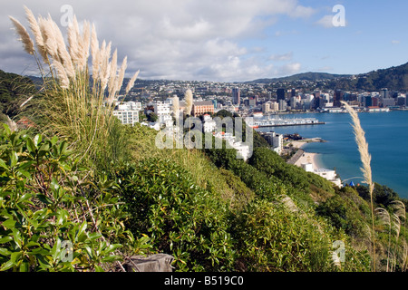 Hikers' view of Wellington, New Zealand, from The Town Belt - Stock Photo