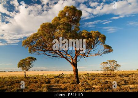 Corrigin, Western Australia, Australia - Stock Photo