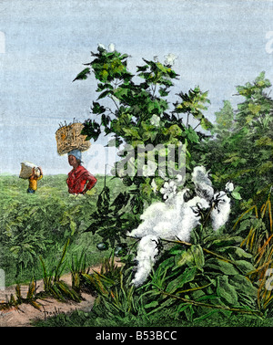 African-American slaves carrying baskets of cotton in a field. Hand-colored halftone of an illustration - Stock Photo