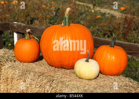 Pumpkins on bale of hay Oregon USA - Stock Photo