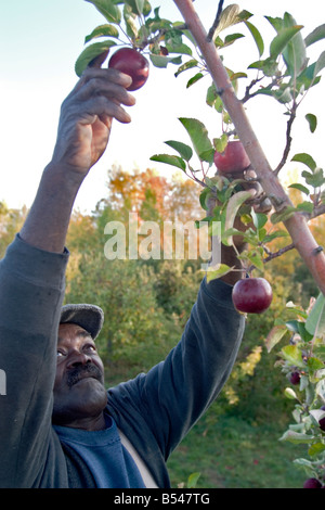 Migrant Farm Workers at Allenholm Farms in South Hero VT - Stock Photo