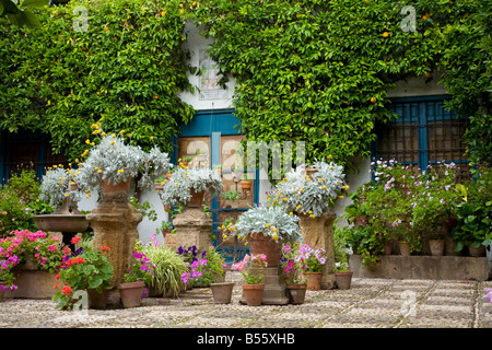 Cordoba May Patio contest festival Andalucia Andalusia Spain Flowers Stock Ph...