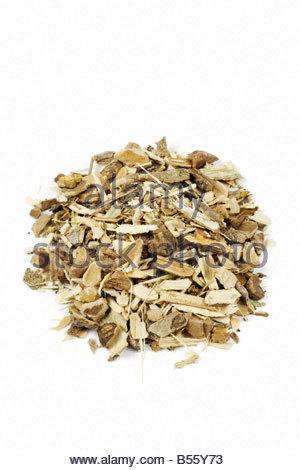 Zanthoxylum americanum  - prickly ash bark herb - Stock Photo