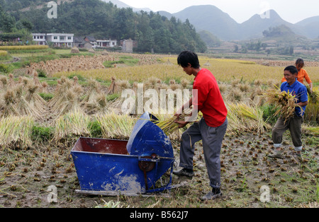 Chinese farmers harvesting rice in Guizhou Province China - Stock Photo