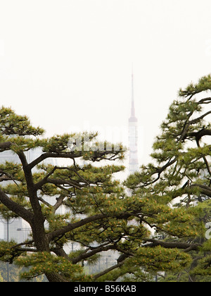 Trees and tokyo tower - Stock Photo