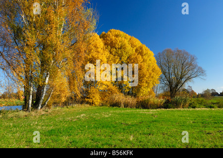 Trees during fall season standing at the Elbe river in the south of Hamburg. - Stock Photo