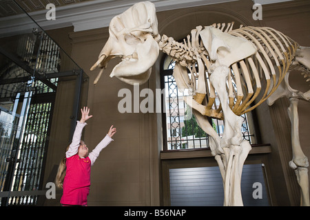 Girl reaching for an elephant skeleton - Stock Photo
