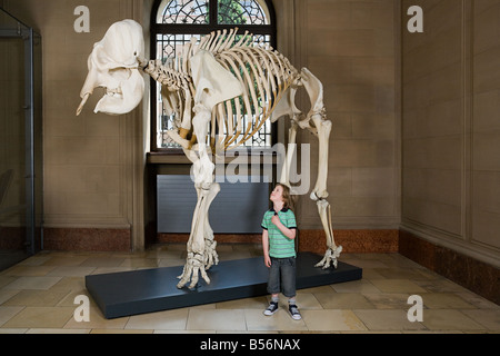 Boy looking at an elephant skeleton - Stock Photo