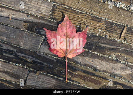 Single red leaf on a wooden floor - Stock Photo
