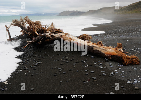 Drift wood and pebbles on black sands beach near Kaikoura Canterbury South Island New Zealand - Stock Photo