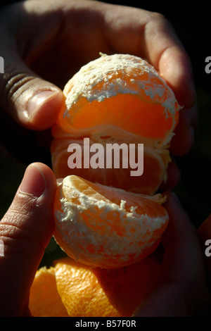 closeup detail of peeled tangerine - Stock Photo