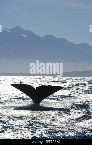 Whale's Tail Kaikoura Canterbury South Island New Zealand - Stock Photo