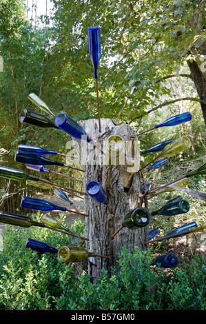 African Bottle Tree At Kanapaha Botanical Gardens Gainesville Florida    Stock Photo