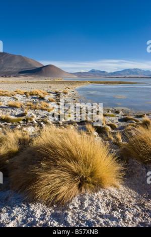 Altiplano, Los Flamencos National Reserve, Atacama Desert, Antofagasta Region, Norte Grande, Chile, South America - Stock Photo