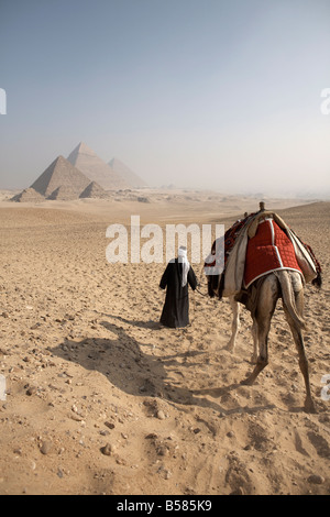 A Bedouin guide and camel approaching the Pyramids of Giza, UNESCO World Heritage Site, Cairo, Egypt, North Africa, - Stock Photo