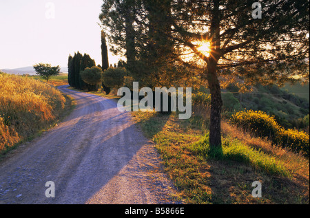 Country lane at sunrise, with sun shining through trees, near Pienza, Tuscany, Italy, Europe - Stock Photo