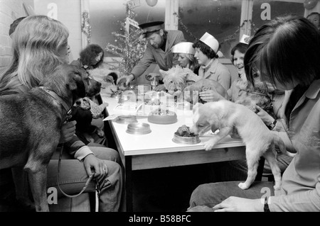 Dog Owners and their pets seen here having a Christmas party. December 1976 76-07481-013 - Stock Photo