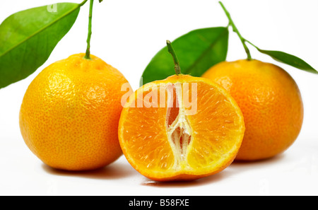 Clementines Nules on white background - Stock Photo