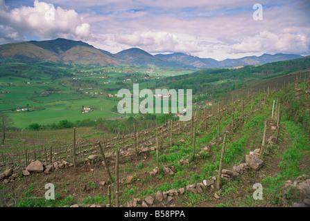 Vineyards near St. Jean Pied de Port, Basque area, Aquitaine, France, Europe - Stock Photo