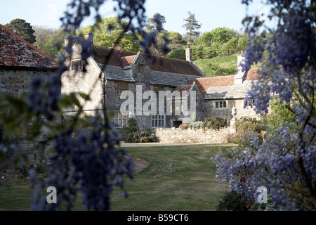 Mottistone Manor House NT National Trust through mauve wisteria flowers on a summer evening Isle of Wight England - Stock Photo