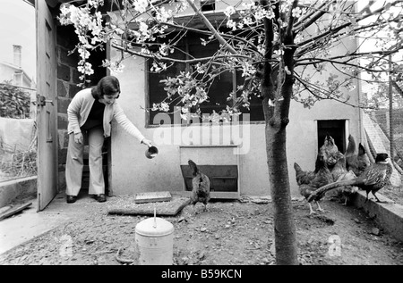 French housewife Mrs. Maria Quaranta feeds the family chickens in their back garden. April 1975 75 - Stock Photo