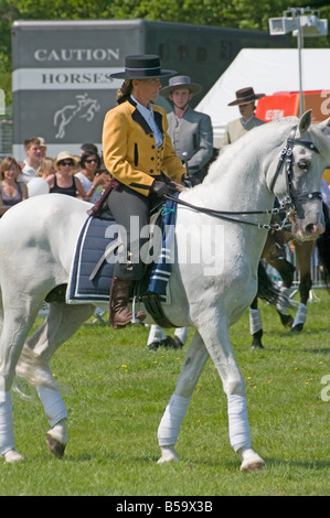 Andalusian Stallion with a Female Rider In Traditional Costume person Woman Female Riding White Horse - Stock Photo