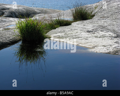 Tuft of grass reflecting in a waterhole - Stock Photo