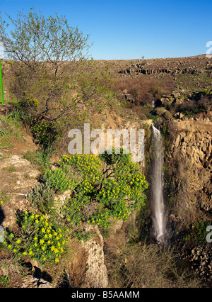 Wild flowers and waterfall in the Gamla Nature Reserve on the Golan Heights, Israel, Middle East - Stock Photo