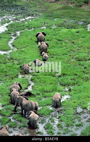 Elephant Amboseli National Park Kenya East Africa Africa - Stock Photo