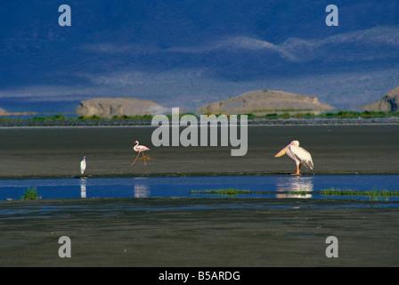 Lake Natron, large soda lake, Eastern Rift Valley, Tanzania, East Africa, Africa - Stock Photo