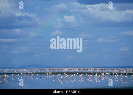 Lake Natron, Eastern Rift Valley, Tanzania, East Africa, Africa - Stock Photo