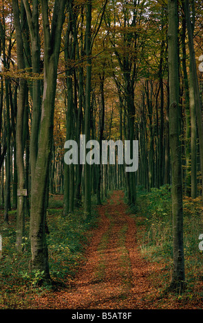 Woodland in autumnal hues - Stock Photo