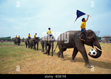 Line of elephants in a soccer team at the annual elephant Round up at Surin City Thailand Asia A Evrard - Stock Photo
