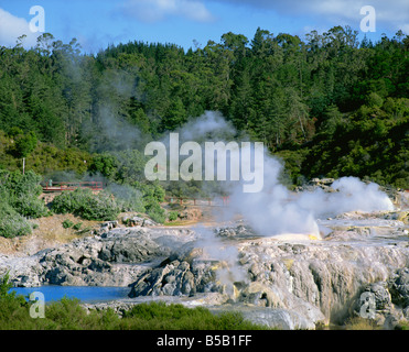Steam rising in the Whakarewarewa Thermal Reserve in Rotorua South Auckland North Island New Zealand Pacific - Stock Photo