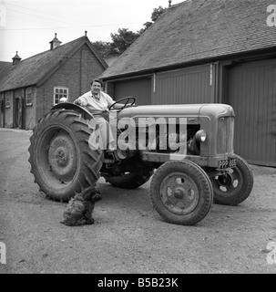 Mrs. Moss a livestock farmer seen here driving a Ferguson tractor around the farm. 1954 - Stock Photo