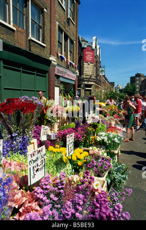 Vibrant displays of cut flowers at East End's Sunday flower market, Columbia Road, London, England, Europe - Stock Photo